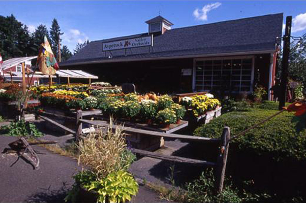 Easton wholesale plant nursery