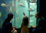 Family enjoying watching at the big aquarium